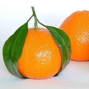 Healthy detoxes 5:2 diet